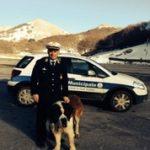 cane polizia locale