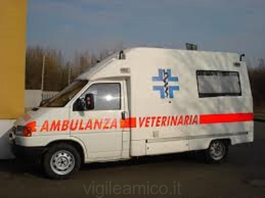 ambulanza_veterinaria